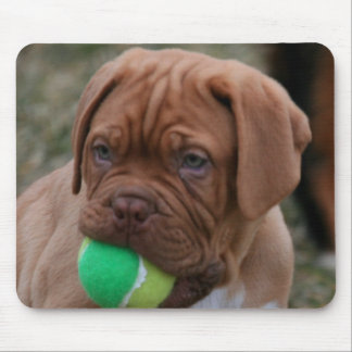 French Mastiff Puppy Mouse Pad