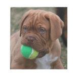 French Mastiff Puppy Scratch Pad