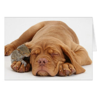 French Mastiff puppy with squirrel Card