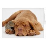 French Mastiff puppy with squirrel Greeting Card