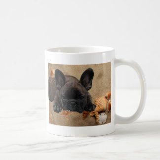 French one. Bulldogge cash cup