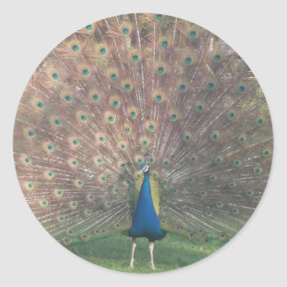 French Peacock Classic Round Sticker