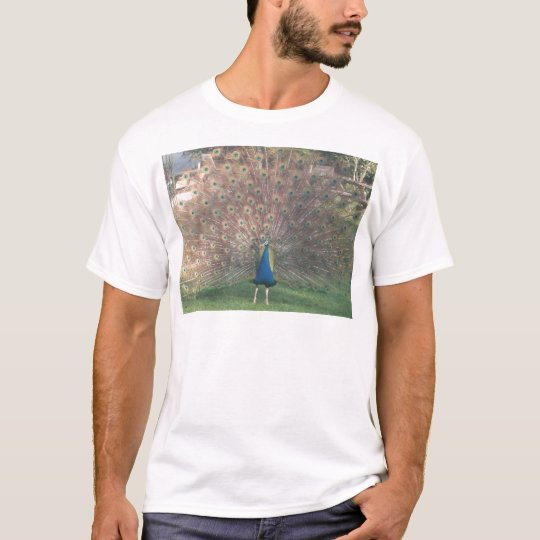 French Peacock T-Shirt