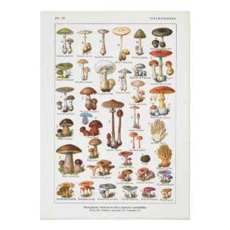 French Poisonous & Edible Mushrooms Print