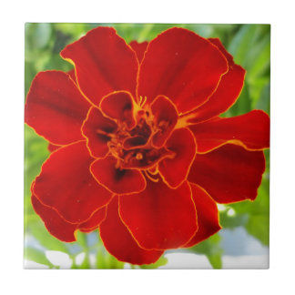 French Red Marigold Flower Tile