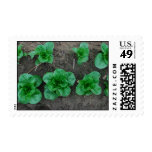 French Romaine Stamps