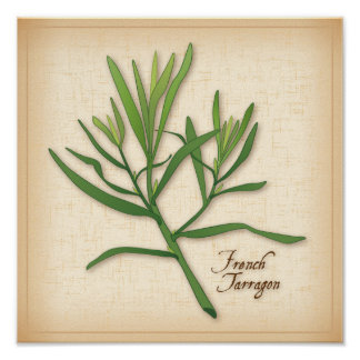 French Tarragon Herb Poster