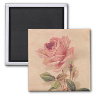 French Victorian Pink Rose 2 Inch Square Magnet
