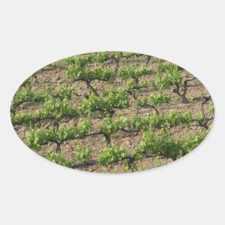 French Vineyard Oval Sticker