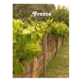 French Vineyard Post Card
