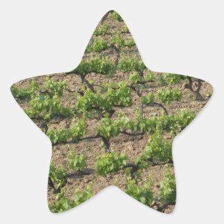 French Vineyard Star Sticker