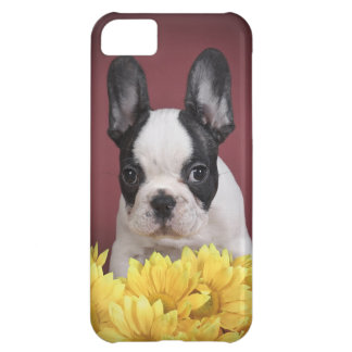 Frenchie - French bulldog puppy Case For iPhone 5C