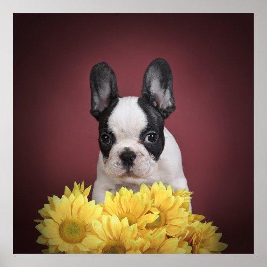 Frenchie - French bulldog puppy Poster
