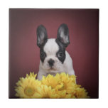 Frenchie - perrito del dogo francés azulejo cerámica