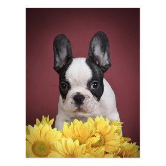 Frenchie - perrito del dogo francés tarjetas postales