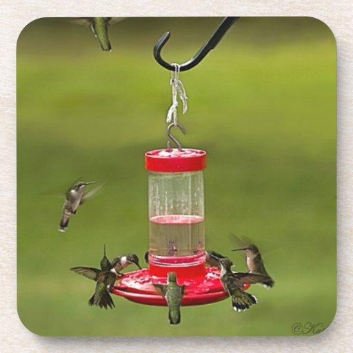 Frenesí de alimentación del colibrí Throated de ru Posavasos De Bebidas