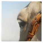 Freno del caballo teja  ceramica