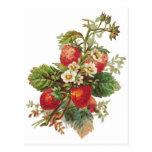 fresas botánicas postales