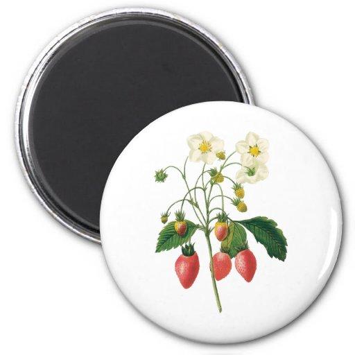Fresas de la comida de las bayas de la fruta del imán redondo 5 cm