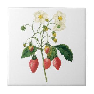 Fresas de las bayas de la fruta de la comida del azulejo cuadrado pequeño