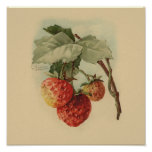 Fresas del vintage poster