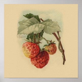 Fresas del vintage póster
