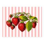 Fresas en rayas rosadas y blancas tarjetas postales
