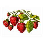 Fresas frescas postal