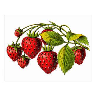 Fresas frescas postales