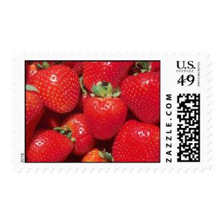 fresas sello