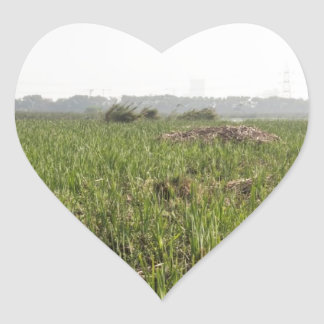 Fresh and dried grass in Okhla Bird Sanctuary Heart Sticker