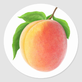 Fresh apricot classic round sticker