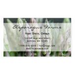 Fresh Asparagus Business Card Template