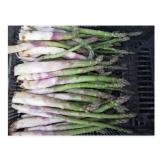 Fresh asparagus hand picked from the garden postcard
