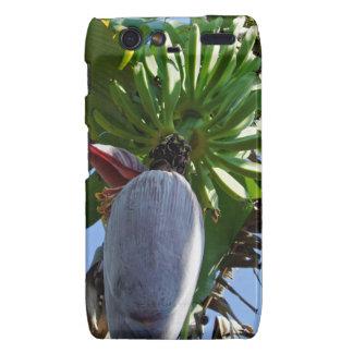 fresh banana droid RAZR cases