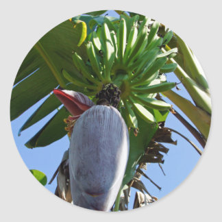 fresh banana classic round sticker