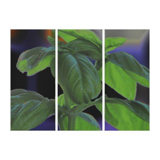 Fresh Basil Closeup Canvas Print