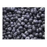 Fresh blueberries postcards