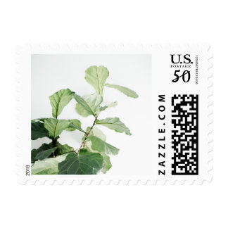 Fresh + Bright Fiddle Leaf Fig Tree Postage