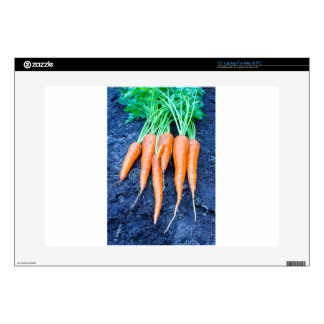 Fresh carrots lying on black soil.JPG Decals For Laptops