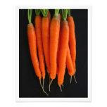 Fresh Carrots Photo Print