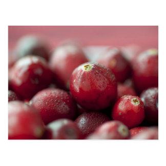 Fresh Cranberries Postcard