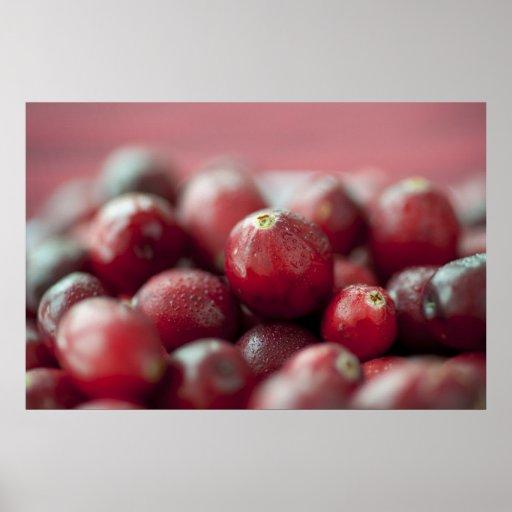Fresh Cranberries Print