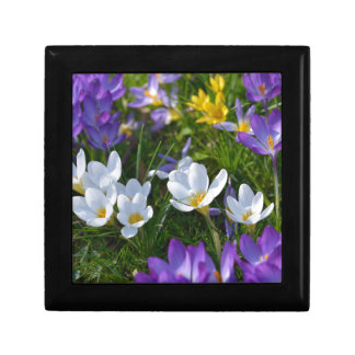 Fresh crocuses of different colors keepsake box