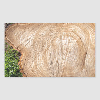 Fresh cut tree stump rectangular sticker