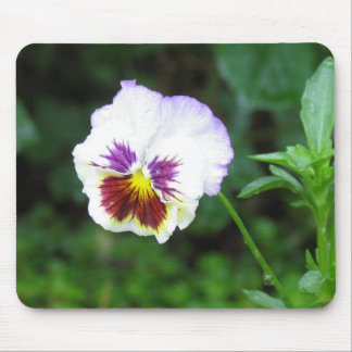 Fresh Faced Pansy Mouse Pad
