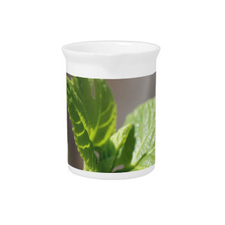 Fresh Fig Leaf Beverage Pitcher