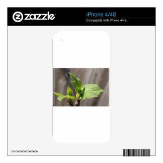 Fresh Fig Leaf Skin For iPhone 4S