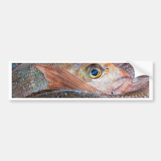 Fresh fish on a market bumper sticker