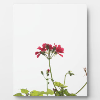 Fresh Flower Plaque